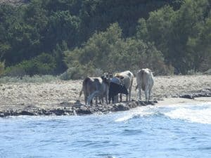 Antiparos surfing livadia beach